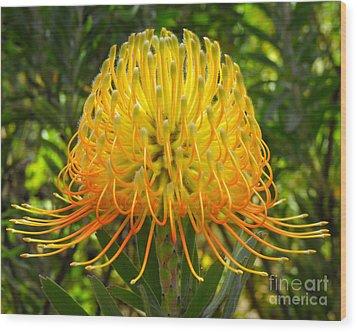 Orange Protea Flower Art Wood Print by Rebecca Margraf