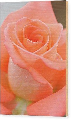 Orange Rose Wood Print by Atiketta Sangasaeng