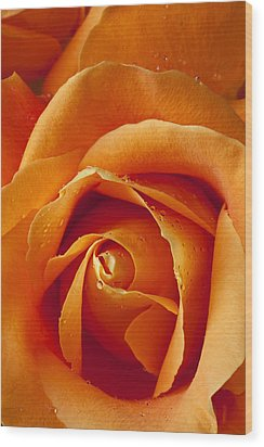 Orange Rose Close Up Wood Print by Garry Gay