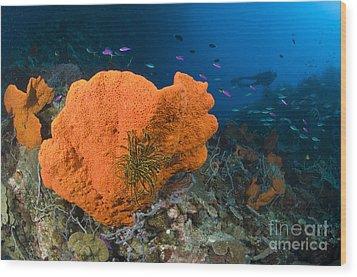 Orange Sponge With Crinoid Attached Wood Print by Steve Jones