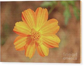 Orange Surbert Wood Print