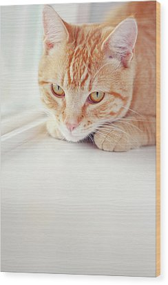 Orange Tabby Cat On White Window Sill Wood Print by Kellie Parry Photography