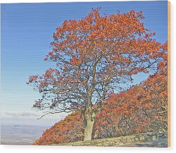 Wood Print featuring the photograph Orange Tree And Blue Sky by Shirin Shahram Badie