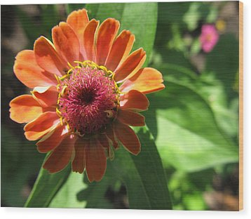 Wood Print featuring the photograph Orange Zinia by Tina M Wenger