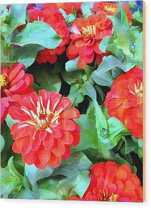 Orange Zinnias Wood Print by Elaine Plesser