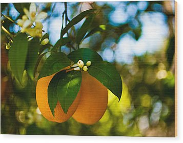 Oranges And Blossoms Wood Print by Dorothy Cunningham