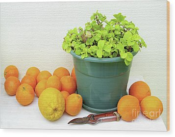 Oranges And Vase Wood Print by Carlos Caetano