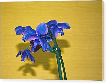 Orchid #1 Wood Print by David Alexander