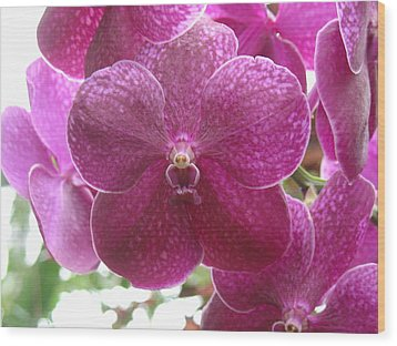 Orchid Cluster Wood Print by Charles and Melisa Morrison