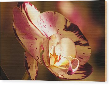 Orchid Fangs Wood Print by Bj Hodges