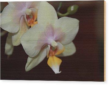 Orchid I Wood Print by Kelly Hazel