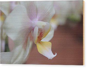Orchid II Wood Print by Kelly Hazel