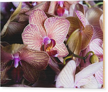 Orchid IIi Wood Print by Christopher Holmes
