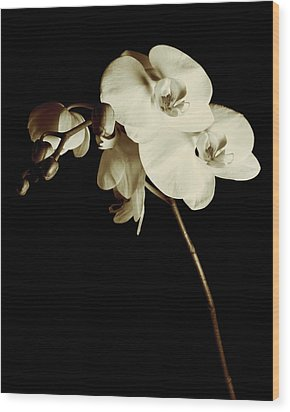 Orchid Wood Print by James Bethanis