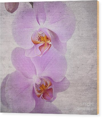 Orchid Wood Print by Jane Rix