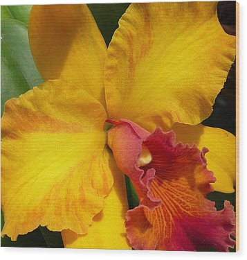 Orchid No. 21 Wood Print by Gregory Young