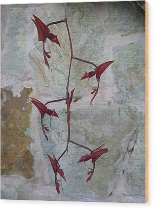 Orchid No.22 Wood Print by Gregory Young