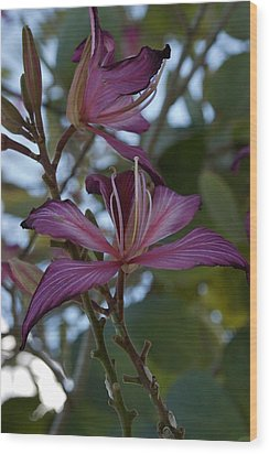 Orchid Tree Wood Print by Joseph Yarbrough