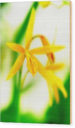 Orchid Vi Wood Print by Floyd Menezes