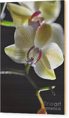 Wood Print featuring the photograph Orchidee by Sylvie Leandre