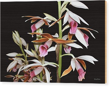 Orchids 006 Wood Print by George Bostian