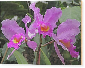 Orchids 14 Wood Print by Becky Lodes