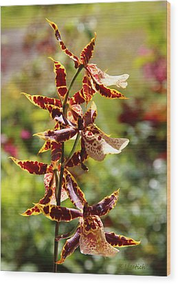 Wood Print featuring the photograph Orchids Catching Morning Sunshine by Kerri Ligatich
