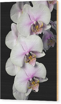 Orchids Wood Print by David Chapman