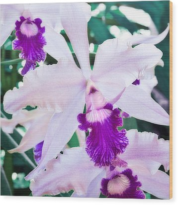 Wood Print featuring the photograph Orchids White And Purple by Steven Sparks