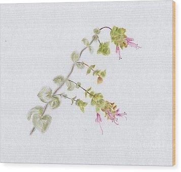 Oregano Wood Print by Annemeet Hasidi- van der Leij