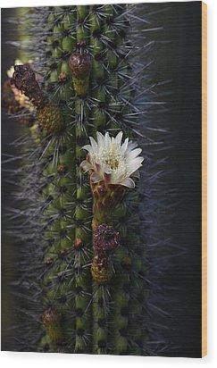 Organ Pipe Cactus  Wood Print by Saija  Lehtonen