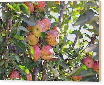 Organic Apples In A Tree Wood Print by Susan Leggett