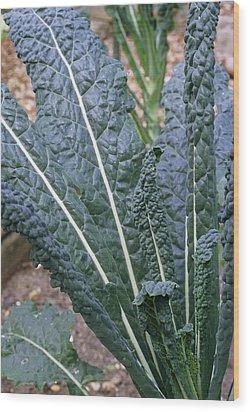 Organic Black Kale Cabbage Wood Print by Maxine Adcock