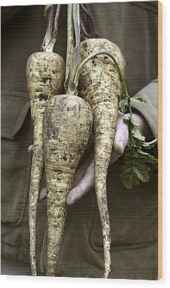 Organic Parsnips Wood Print by Maxine Adcock