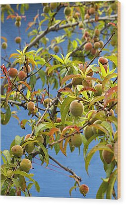 Organic Peach Tree, Wood Print by Pete Starman