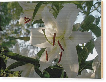 Wood Print featuring the photograph Oriental Lilies by Wanda Brandon