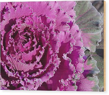 Wood Print featuring the photograph Ornamental Kale by MaryJane Armstrong