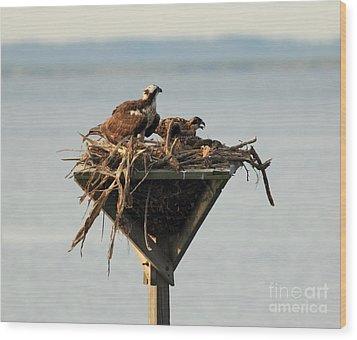 Osprey And Chicks Wood Print