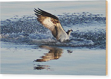 Osprey Crashing The Water Wood Print by Bill Cannon