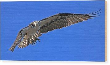 Osprey Flight Wood Print by Larry Nieland