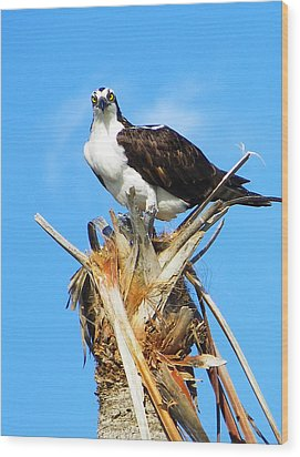 Osprey With Fish Wood Print