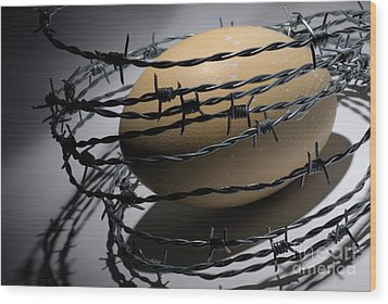 Ostrich Egg Surrounded By Barbed Wire Wood Print by Sami Sarkis
