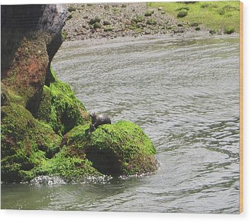 Wood Print featuring the photograph Otter In Bellingham Bay by Karen Molenaar Terrell