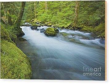 Out Of The Rainforest Wood Print by Mike  Dawson
