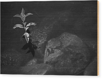 Out Of The Water Comes Shadows Bw Wood Print by Karol Livote