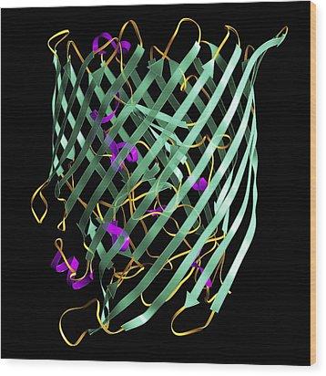 Outer Membrane Receptor Protein Molecule Wood Print by Laguna Design