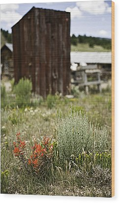 Outhouse Path Wood Print by Melany Sarafis