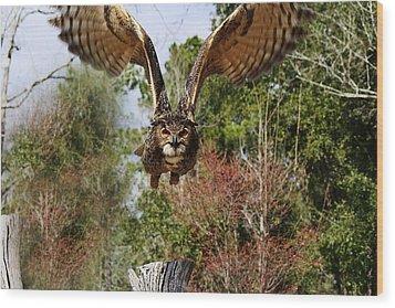 Owl In Flight Wood Print by Paulette Thomas