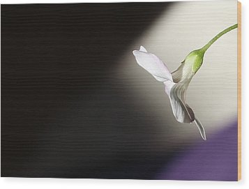 Wood Print featuring the photograph Oxalis Bloom by Kume Bryant