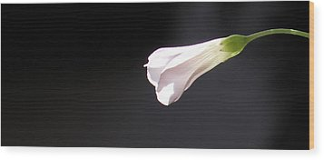 Wood Print featuring the photograph Oxalis Bud by Kume Bryant